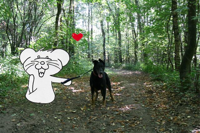 Promenons nous dans les bois avec Aki²