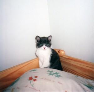 1999 - Lenwë