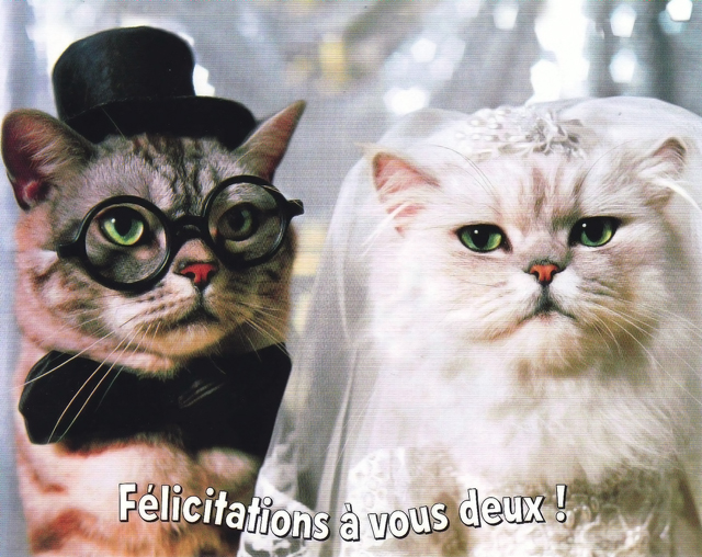 chat serieux pour mariage pacelibertine