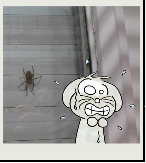 Arachnophobie du soir, bonsoir !