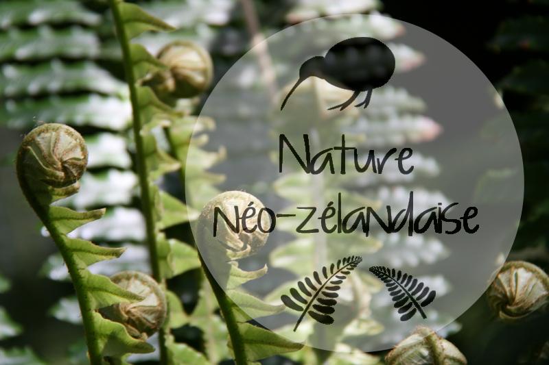 Nature néo-zélandaise