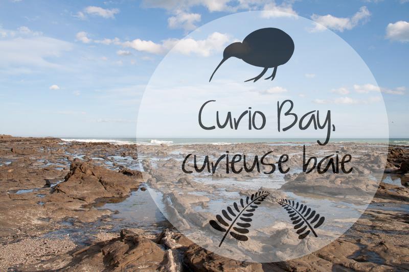 Curio Bay, curieuse baie