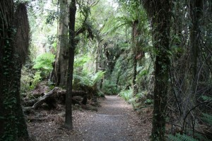Jungle néo-zélandaise