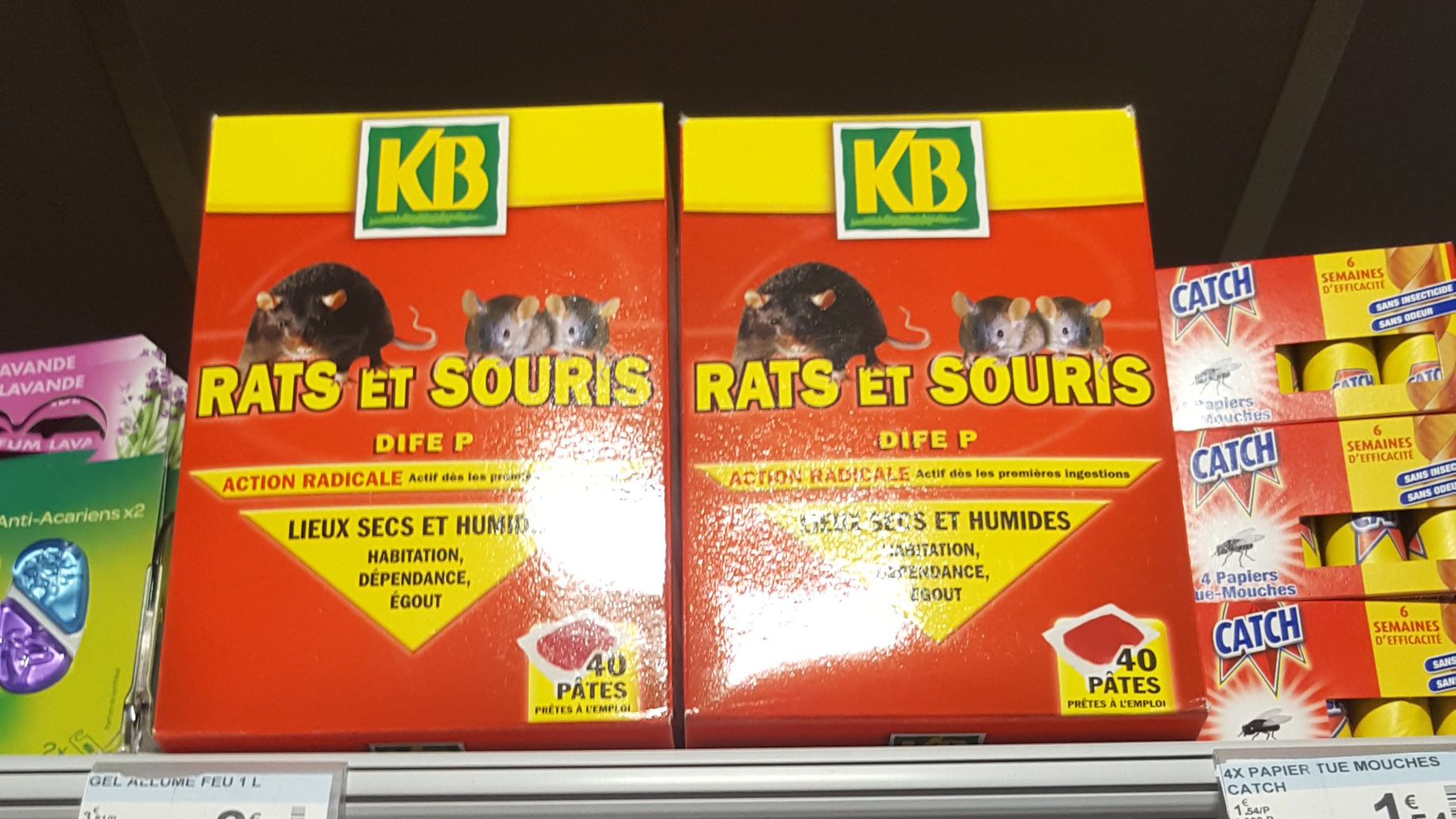 croquettes chat