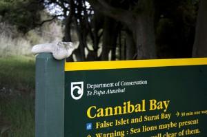 Cannibal Bay ah ah gloups !